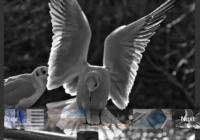 pure-javascript-fullscreen-image-gallery-thumbnail-navigation