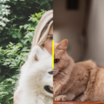 Minimal Mobile-compatible Image Comparison Slider – slider-before-after