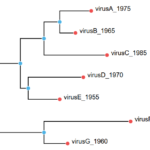 Phylogenetic Tree Library For Browser And Node.js – figtree.js