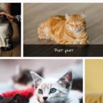 Responsive Justified Photo Gallery In JavaScript – flow-gallery